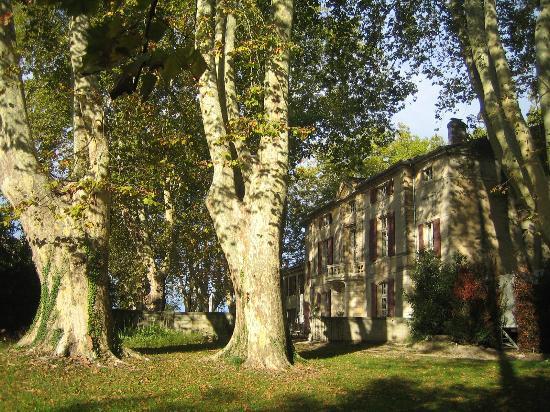 Chateau de Roussan: platanes centenaires