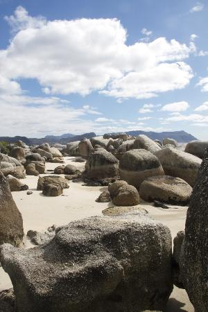Photography Tours: Boulders Beach, Cape Town, South Africa