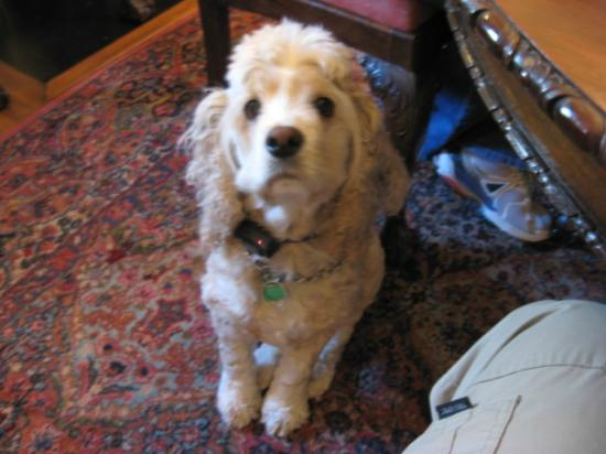 Shadowlawn Bed & Breakfast: The family dog Ceasar, very sweet, calm, and friendly!