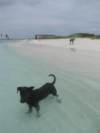 Isla de Carenero - Los Roques : PERRO AMISTOSOS