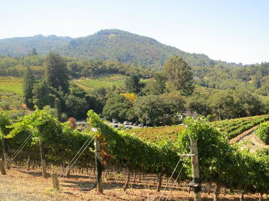 Sonoma Valley : View on Benzinger Tour