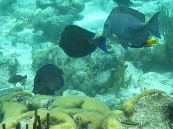 Moby Dick Tours: reef fish