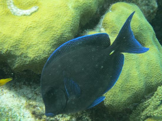 Moby Dick Tours: surgeonfish