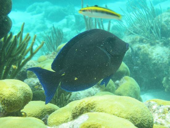 Moby Dick Tours: surgeonfish and wrasse