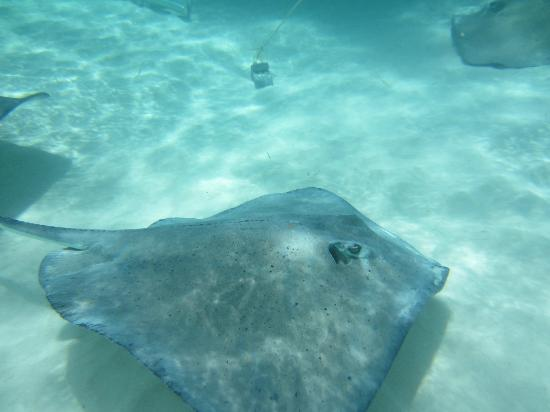 Moby Dick Tours: stingray