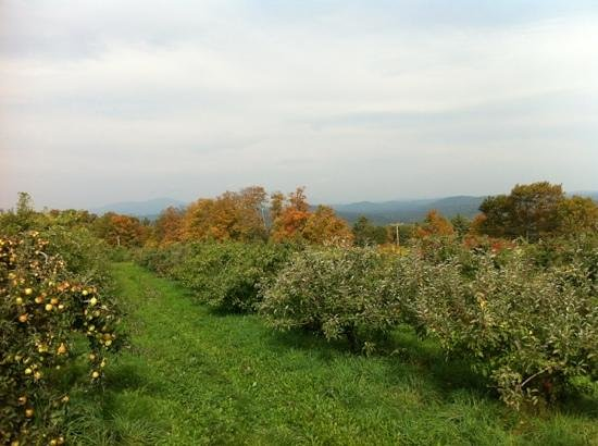 Gould Hill Farm: amazing view from the hilltop orchards