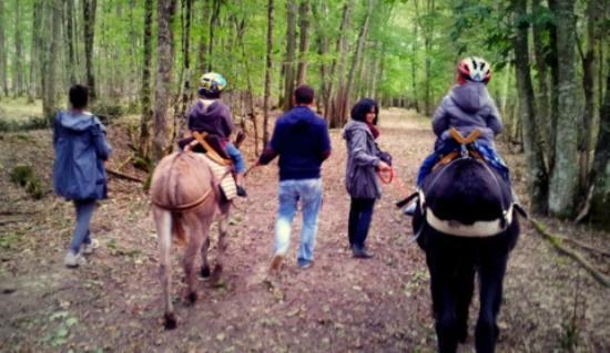 Le Monde d'Ossyane : balade avec des ânes à la découverte du brame du cerf