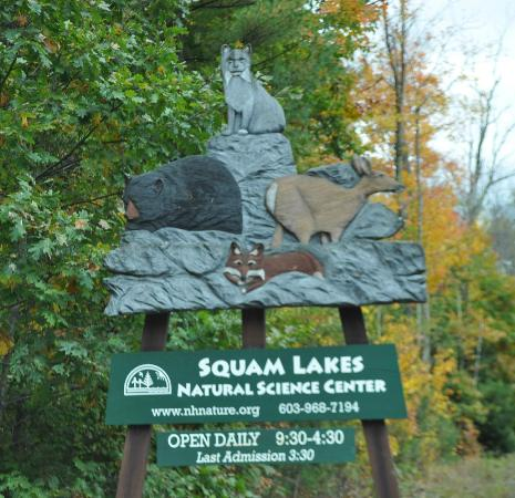 ‪‪Squam Lakes Natural Science Center‬: Squam Lakes Natural Science Center‬