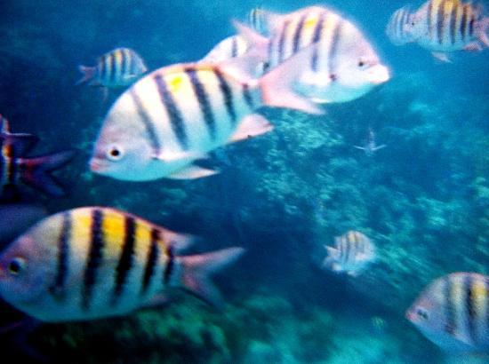 Staniel Cay Yacht Club: Snorkeling