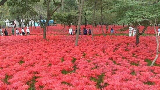 Hidaka, Japão: ??