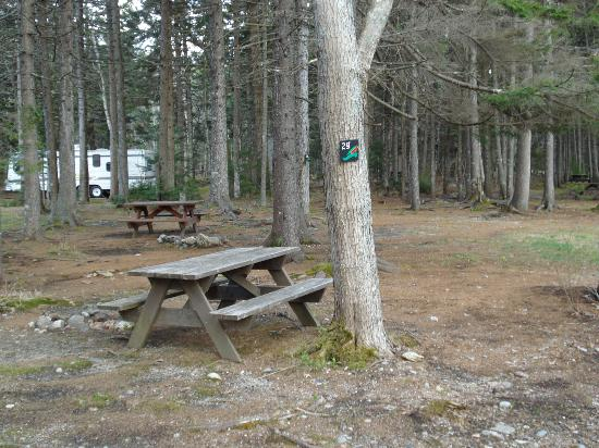 Sherwood Forest Campsite and Cabins : Wooded Sites