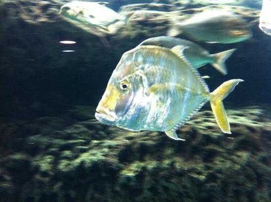 Fish picture of georgia aquarium atlanta tripadvisor for Georgia freshwater fish