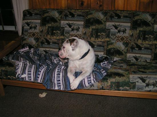 Pemi Cabins: Jobe resting on the futon.