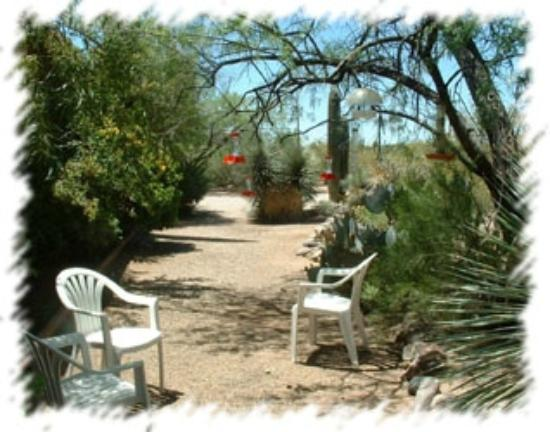 Bed and Bagels of Tucson: Bird Viewing Area
