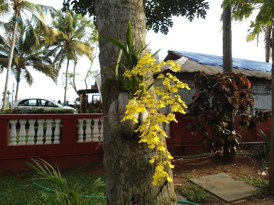 Hill View Beach Resort: orchids in the garden