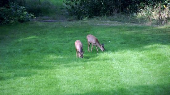 Waterhall Country House, Gatwick: Watching the deer from our room :-)