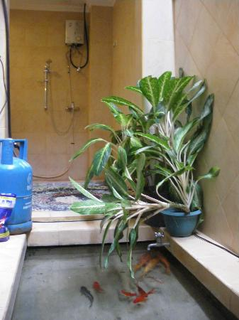 Heliconia Villas: Fish pond in the bathroom