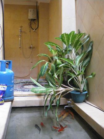 هيليكونيا فيلا: Fish pond in the bathroom 