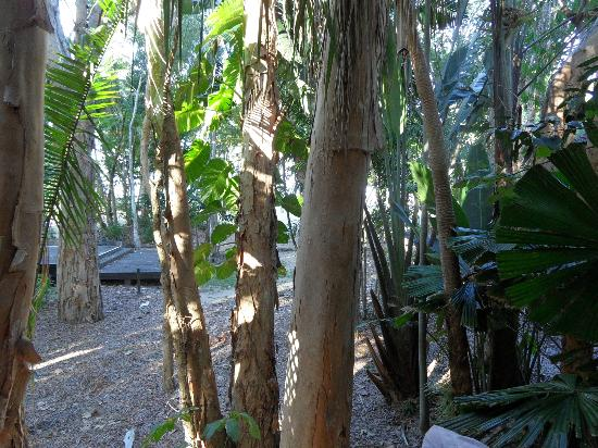 รีสอร์ท แอนด์ สปา คิววาร์ร่าบีช: The grounds are amazing - with wildlife everywhere