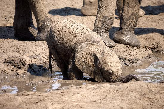 Kanga Camp: Baby Elephant at the waterhole