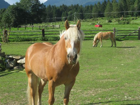 Pensione Prennhof: i cavalli di Angelina e Siegfied