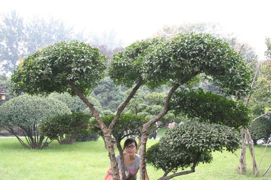 Tang Dynasty Art Garden Hotel: This is in the park, in the very near of the hotel. Debsi is hiding herself behind a nice tree.