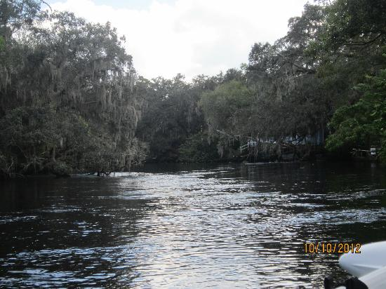 Hillsborough River : Beautiful scenery