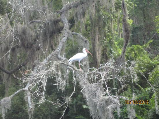 Hillsborough River : Beautiful bird