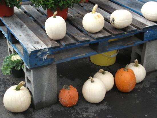 Lakeside Farms: white pumpkins
