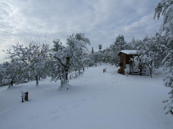 Villa Nobili B&B: An unusual snowfall in our garden