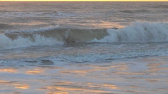 سي سكايب موتل آند أبارتمنتس: wave 