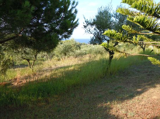 Lithies Houses: View towards the sea
