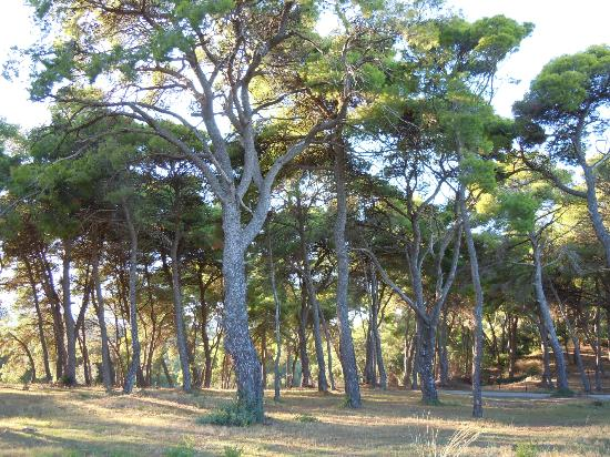 Lithies Houses: Pine trees by Lithies Taverna