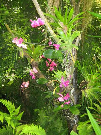 Parc Floral et Tropical de la Court d'Aron: La sère tropicale