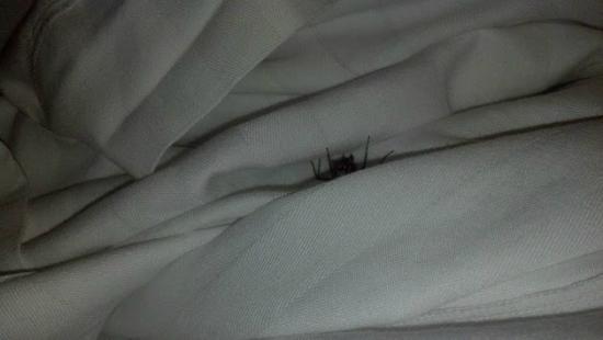 Residence Inn Cincinnati North/Sharonville: Spider in my bed