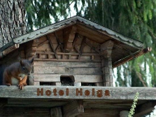 Hotel Helga: Selbst Eichkatzerl sind gern gesehene Gäste !