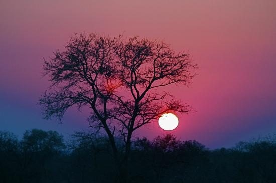 Nkorho Bush Lodge: a sunrise at Nkorho--- Morning Game Drive