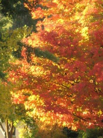 Ada's Place: The glorious sugar maple is right out your window and steps away. Come and bring your camera!