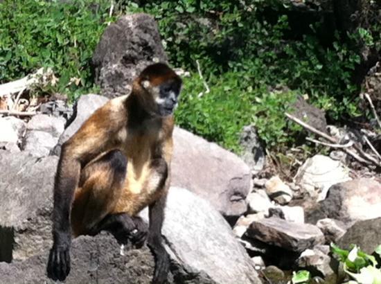 Playa Hermosa: Monkey Island Nicaragua