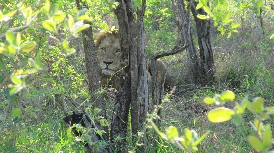 Tydon Safari Camp: Lion