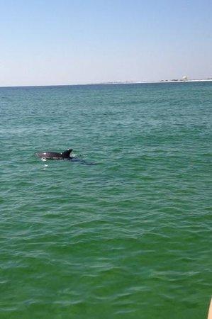 Destin's Original Sea Blaster: dolphins everywhere!