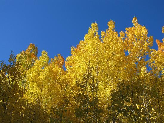 Gunnison National Forest: Aspens