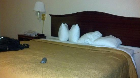 Comfort Inn Sunnyvale - Silicon Valley: Bed is comfortable but these are some tiny pillows