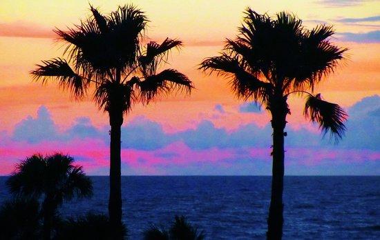 Ocean Village: Sunrise Palms