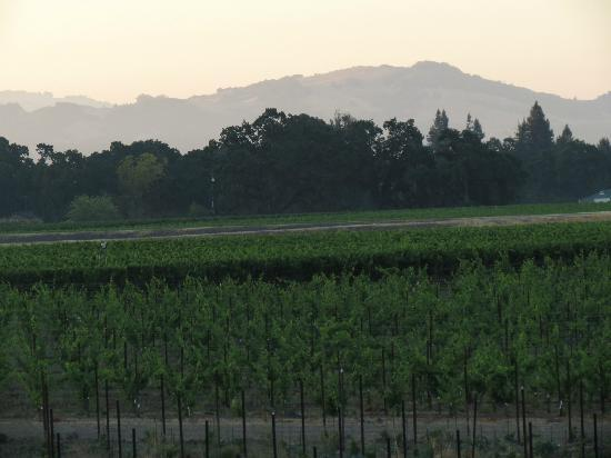 Vintners Inn: Another view of the vineyards and mountains