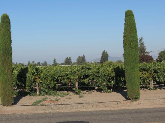 Vintners Inn: vineyards