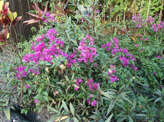Fern Grotto Inn: Beautiful flowers greet you