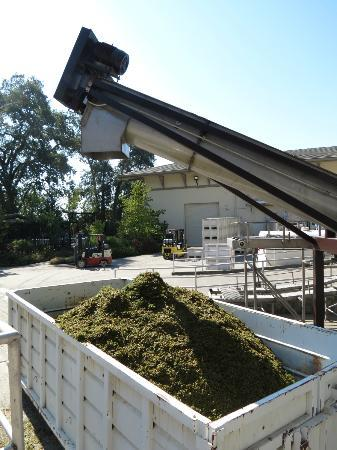 Ferrari-Carano Winery: harvesting the grapes