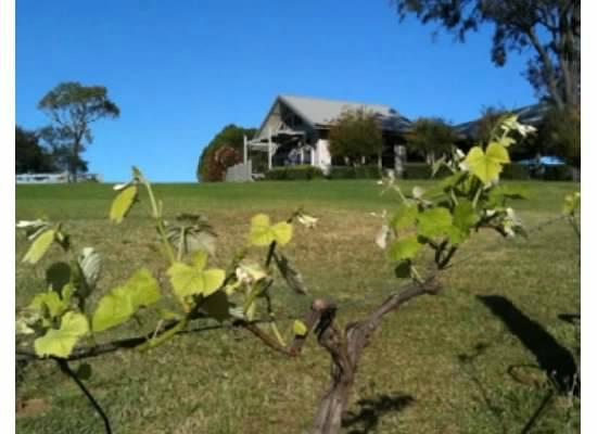 Elfin Hill: The inn from the vines