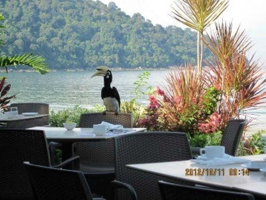Pangkor Island Beach Resort: Dining with hornbill